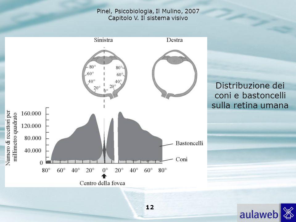 Pinel, Psicobiologia, Il Mulino, 2007 Capitolo V. Il sistema visivo 12 Distribuzione dei coni e bastoncelli sulla retina umana