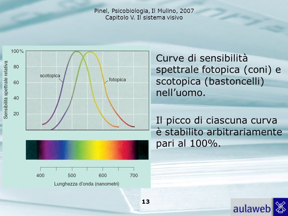 Pinel, Psicobiologia, Il Mulino, 2007 Capitolo V. Il sistema visivo 13 Curve di sensibilità spettrale fotopica (coni) e scotopica (bastoncelli) nelluo