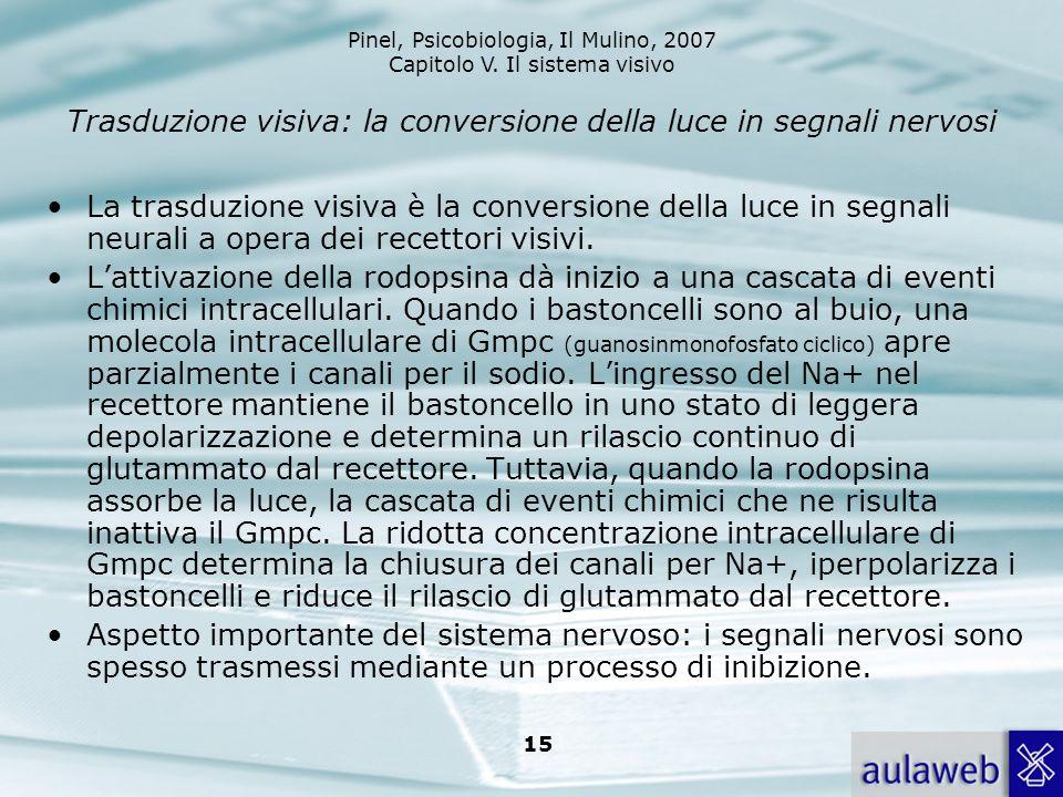 Pinel, Psicobiologia, Il Mulino, 2007 Capitolo V. Il sistema visivo 15 Trasduzione visiva: la conversione della luce in segnali nervosi La trasduzione