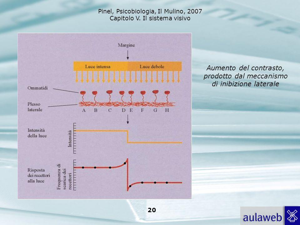 Pinel, Psicobiologia, Il Mulino, 2007 Capitolo V. Il sistema visivo 20 Aumento del contrasto, prodotto dal meccanismo di inibizione laterale
