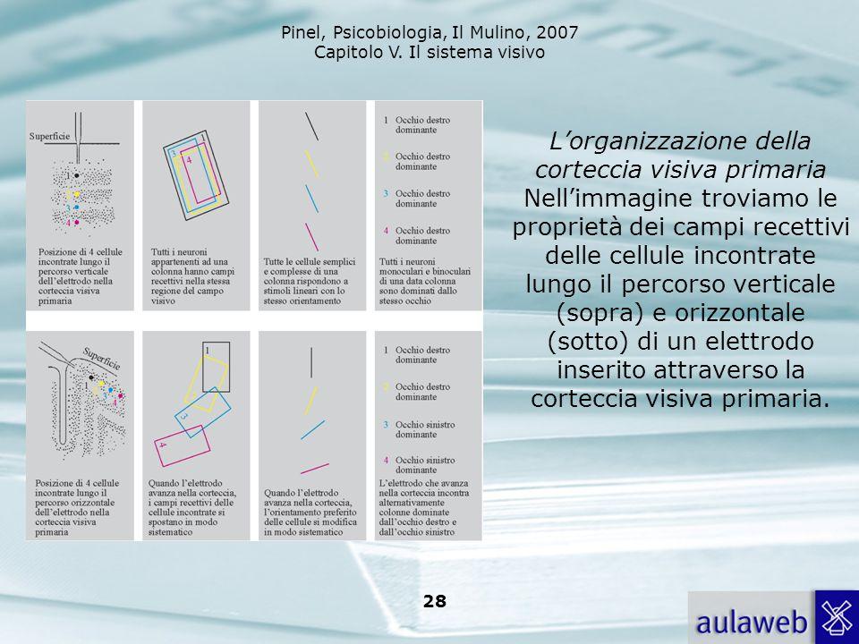 Pinel, Psicobiologia, Il Mulino, 2007 Capitolo V. Il sistema visivo 28 Lorganizzazione della corteccia visiva primaria Nellimmagine troviamo le propri