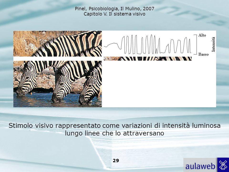 Pinel, Psicobiologia, Il Mulino, 2007 Capitolo V. Il sistema visivo 29 Stimolo visivo rappresentato come variazioni di intensità luminosa lungo linee