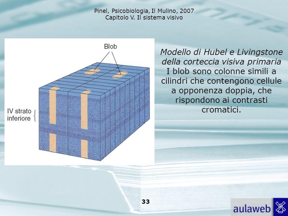 Pinel, Psicobiologia, Il Mulino, 2007 Capitolo V. Il sistema visivo 33 Modello di Hubel e Livingstone della corteccia visiva primaria I blob sono colo