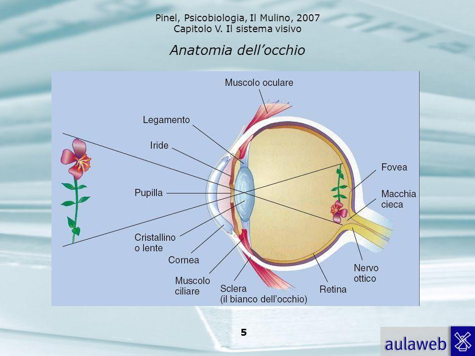 Pinel, Psicobiologia, Il Mulino, 2007 Capitolo V. Il sistema visivo 5 Anatomia dellocchio