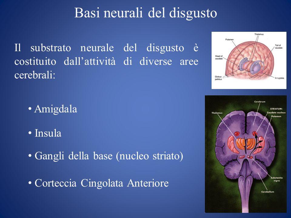 Basi neurali del disgusto Il substrato neurale del disgusto è costituito dallattività di diverse aree cerebrali: Amigdala Insula Gangli della base (nu