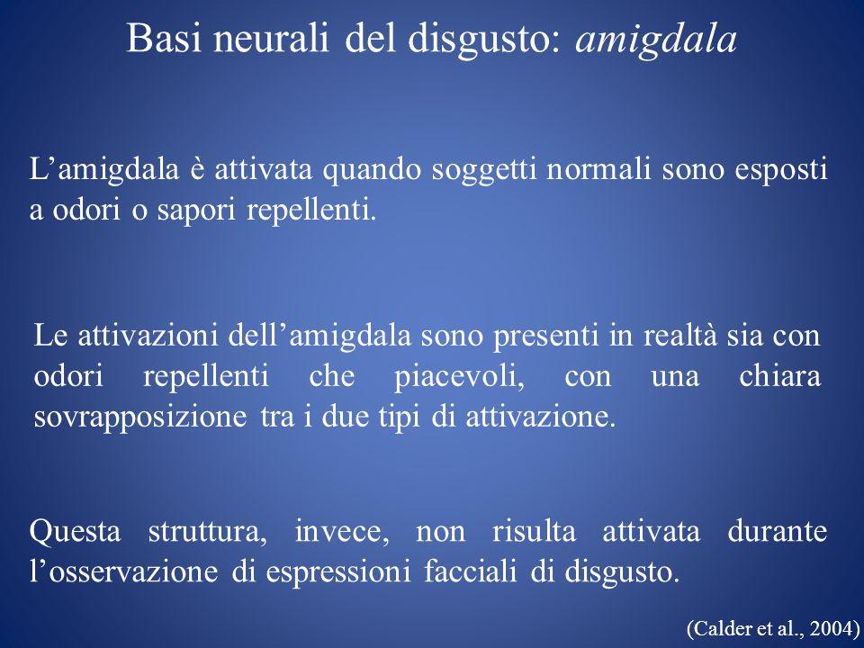 Basi neurali del disgusto: amigdala Lamigdala è attivata quando soggetti normali sono esposti a odori o sapori repellenti. Le attivazioni dellamigdala