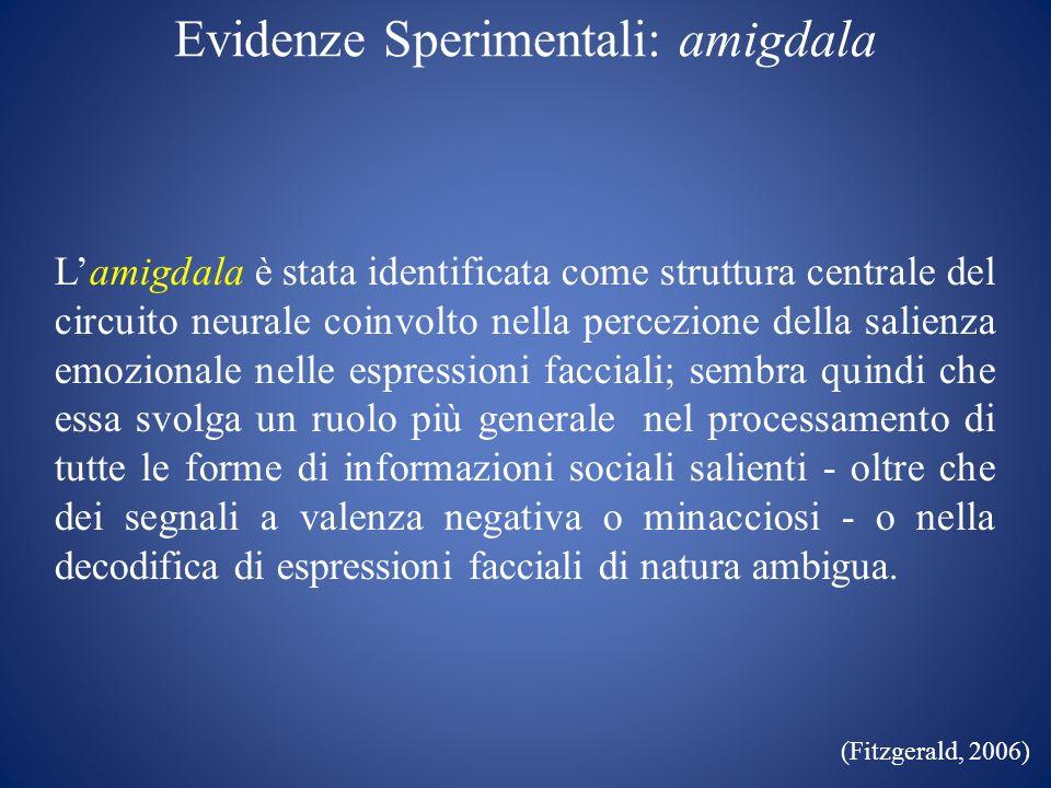 Evidenze Sperimentali: amigdala Lamigdala è stata identificata come struttura centrale del circuito neurale coinvolto nella percezione della salienza