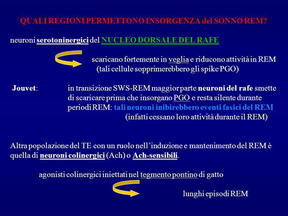 QUALI REGIONI PERMETTONO INSORGENZA del SONNO REM? neuroni serotoninergici del NUCLEO DORSALE DEL RAFE scaricano fortemente in veglia e riducono attiv