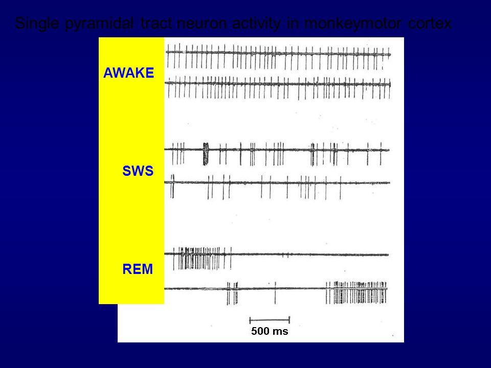 AWAKE SWS REM Single pyramidal tract neuron activity in monkeymotor cortex