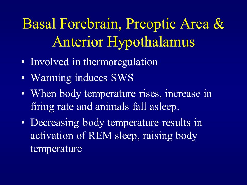 Basal Forebrain, Preoptic Area & Anterior Hypothalamus Involved in thermoregulation Warming induces SWS When body temperature rises, increase in firin