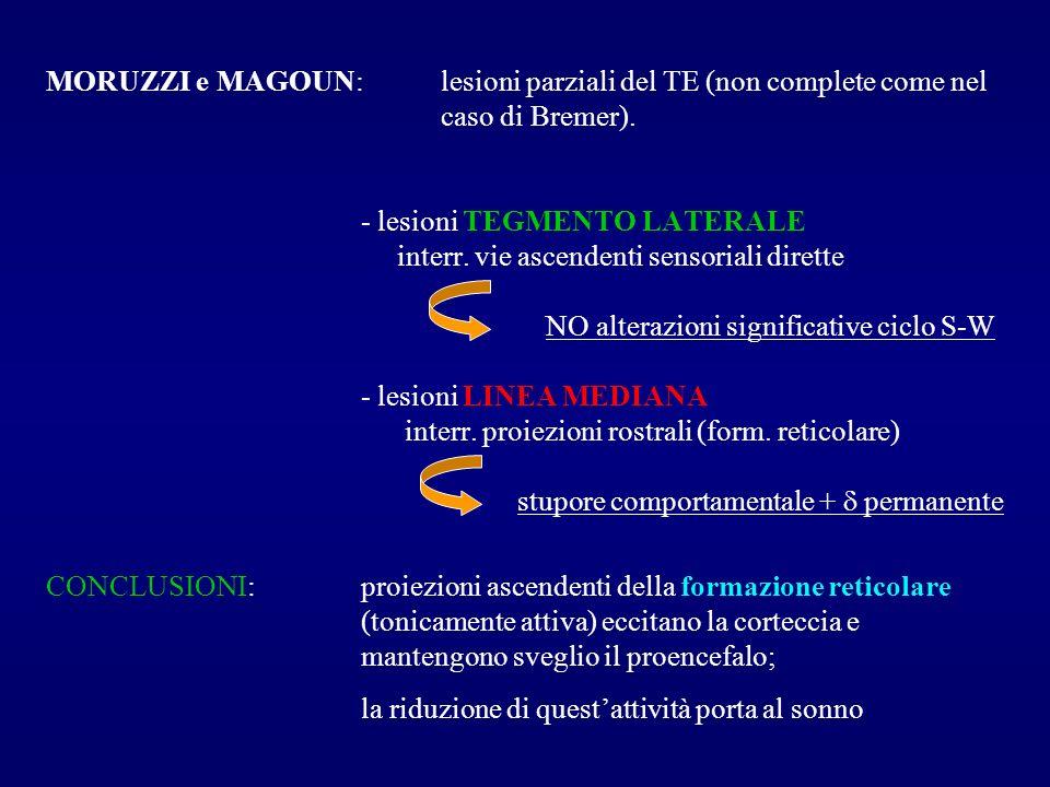 MORUZZI e MAGOUN: lesioni parziali del TE (non complete come nel caso di Bremer). - lesioni TEGMENTO LATERALE interr. vie ascendenti sensoriali dirett