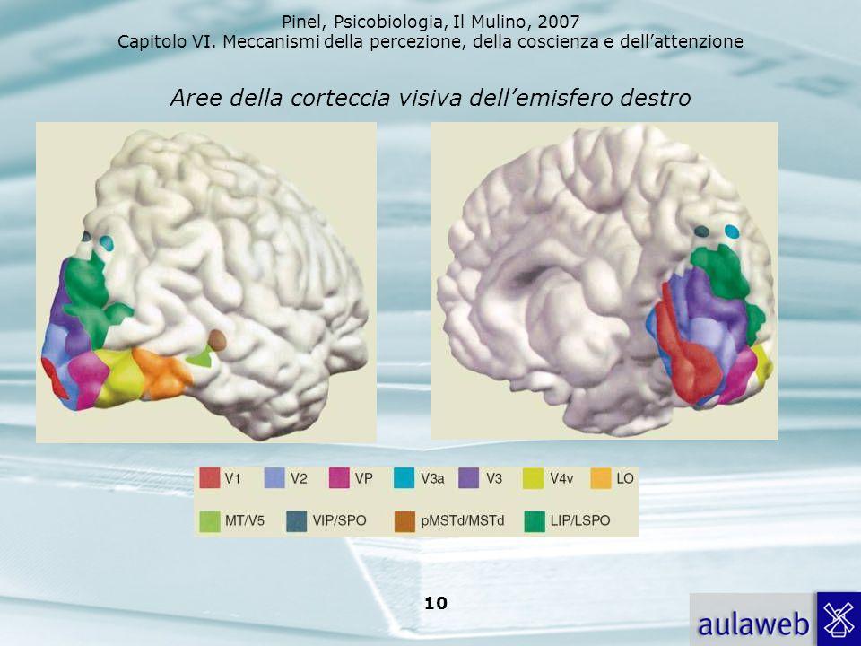 Pinel, Psicobiologia, Il Mulino, 2007 Capitolo VI. Meccanismi della percezione, della coscienza e dellattenzione 10 Aree della corteccia visiva dellem