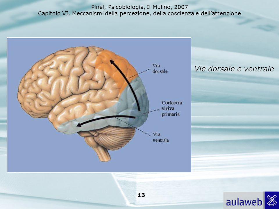 Pinel, Psicobiologia, Il Mulino, 2007 Capitolo VI. Meccanismi della percezione, della coscienza e dellattenzione 13 Vie dorsale e ventrale