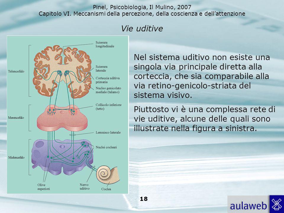 Pinel, Psicobiologia, Il Mulino, 2007 Capitolo VI. Meccanismi della percezione, della coscienza e dellattenzione 18 Vie uditive Nel sistema uditivo no