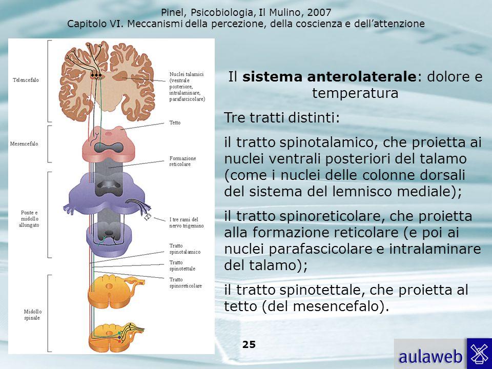 Pinel, Psicobiologia, Il Mulino, 2007 Capitolo VI. Meccanismi della percezione, della coscienza e dellattenzione 25 Il sistema anterolaterale: dolore