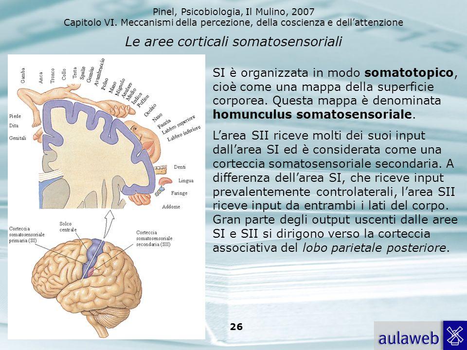Pinel, Psicobiologia, Il Mulino, 2007 Capitolo VI. Meccanismi della percezione, della coscienza e dellattenzione 26 Le aree corticali somatosensoriali