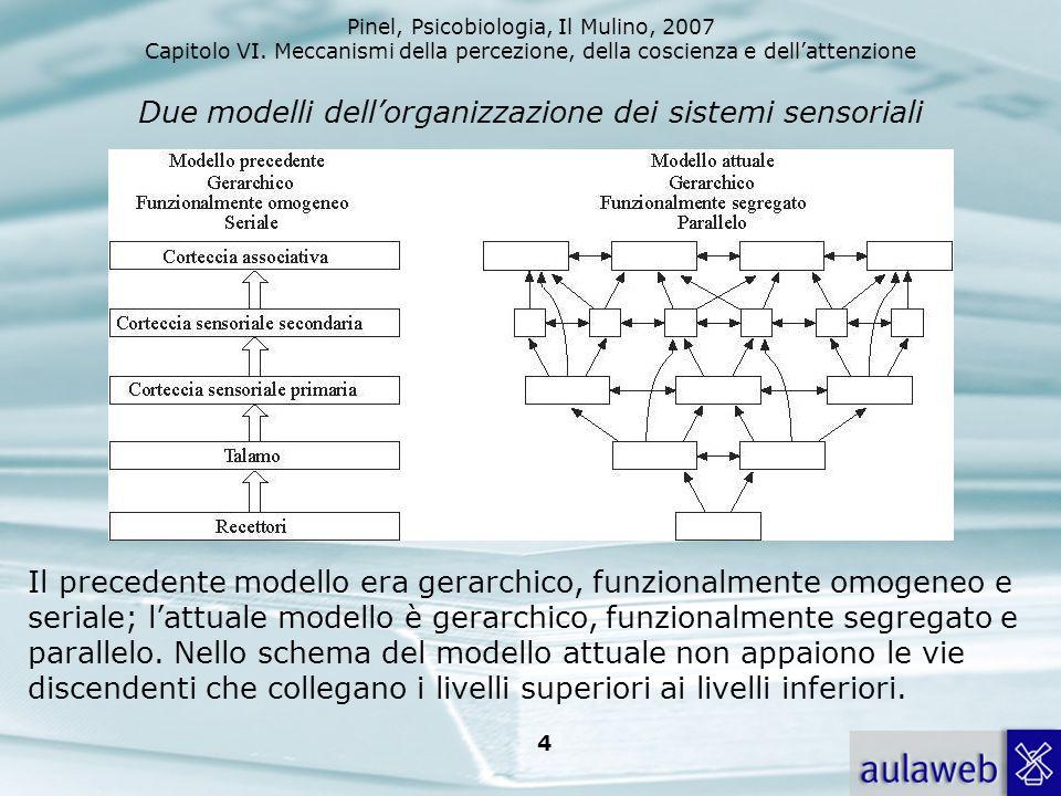 Pinel, Psicobiologia, Il Mulino, 2007 Capitolo VI. Meccanismi della percezione, della coscienza e dellattenzione 4 Due modelli dellorganizzazione dei