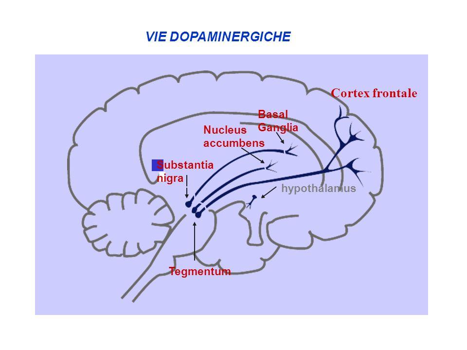 hypothalamus d c Nucleus accumbens Tegmentum b Substantia nigra Basal Ganglia a VIE DOPAMINERGICHE Cortex frontale