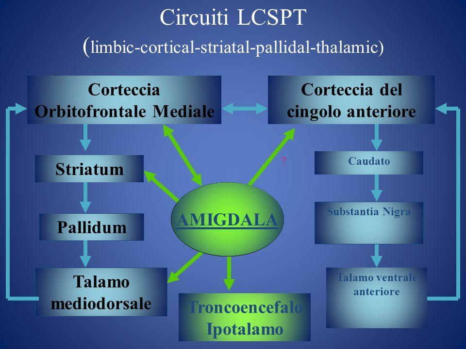 Circuiti LCSPT ( limbic-cortical-striatal-pallidal-thalamic) Corteccia Orbitofrontale Mediale Corteccia del cingolo anteriore AMIGDALA Striatum Pallid