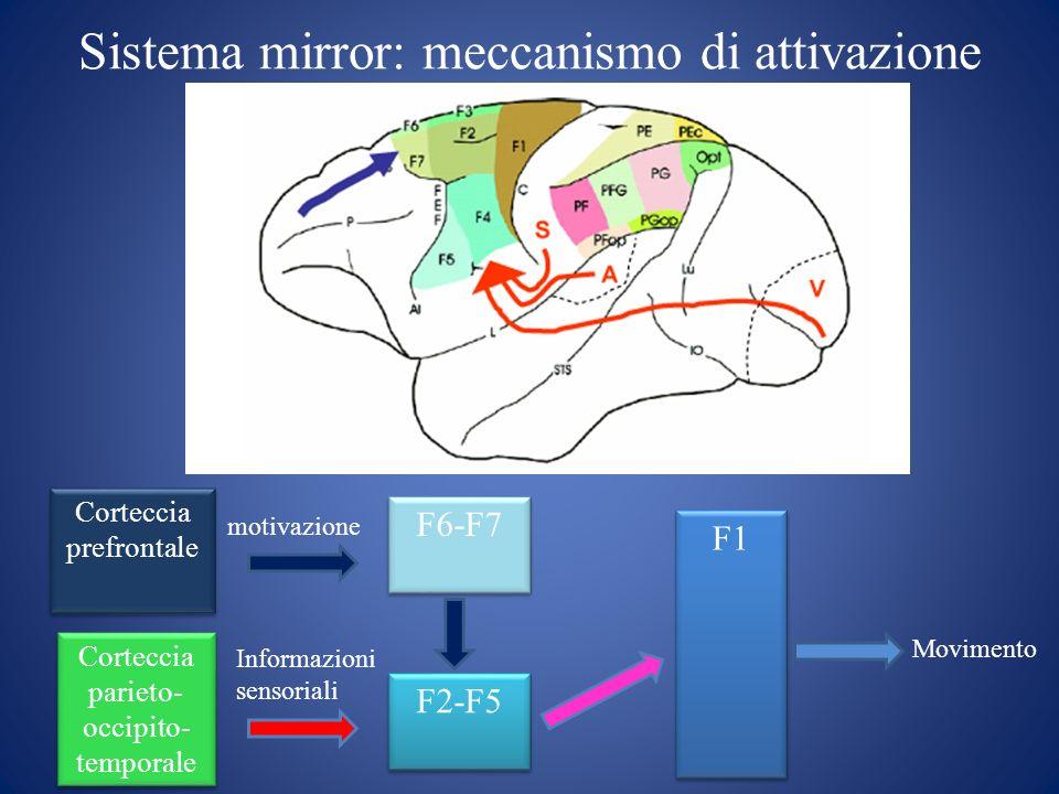 Sistema mirror: meccanismo di attivazione Movimento motivazione F6-F7 F1 F2-F5 Corteccia prefrontale Corteccia parieto- occipito- temporale Informazio