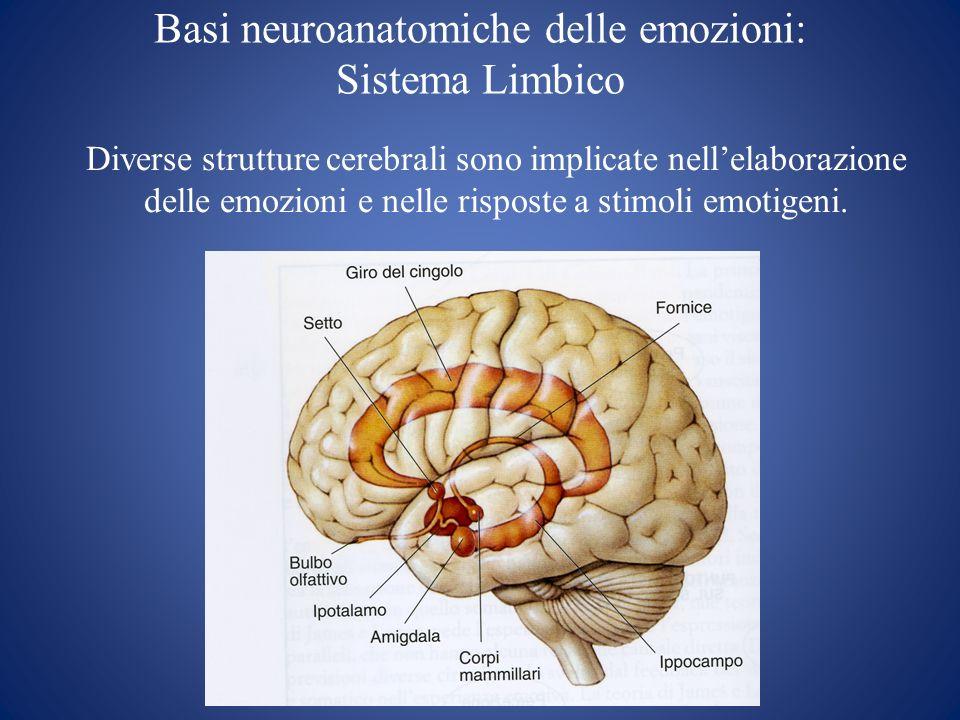Basi neuroanatomiche delle emozioni: Sistema Limbico Diverse strutture cerebrali sono implicate nellelaborazione delle emozioni e nelle risposte a sti