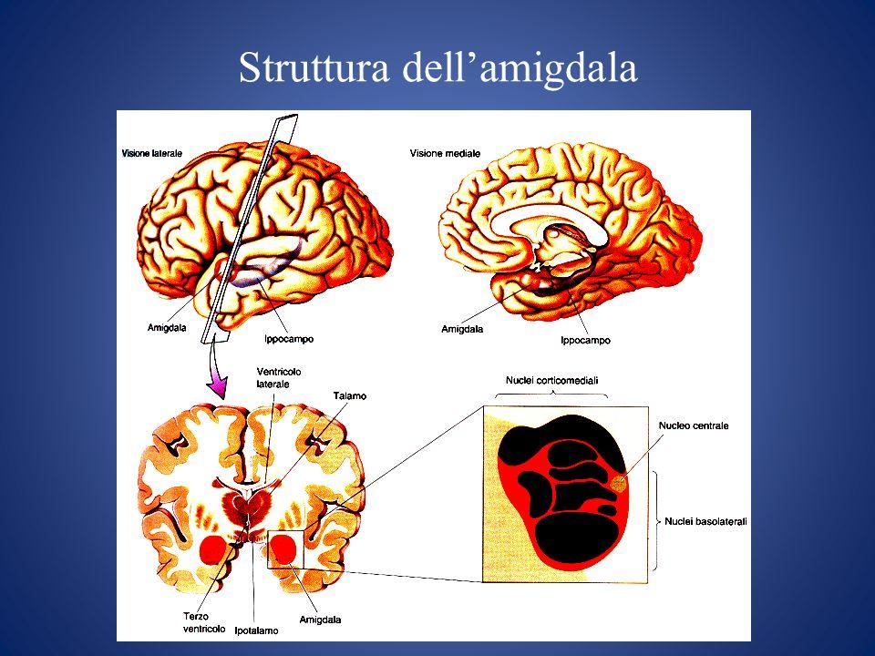 Correlati neurofisiologici dellottimismo Amygdala DMPFC rACC PCC Amigdala Corteccia prefrontale dorsomediale Corteccia cingolata antero-rostrale Corteccia cingolata posteriore Aree cerebrali coinvolte: Attivazione Amigdala: Eventi futuri positivi o negativi Attivazione Amigdala: Eventi futuri positivi o negativi RL L Eventi futuri positivi Eventi futuri negativi R (Sharot et al., 2007)