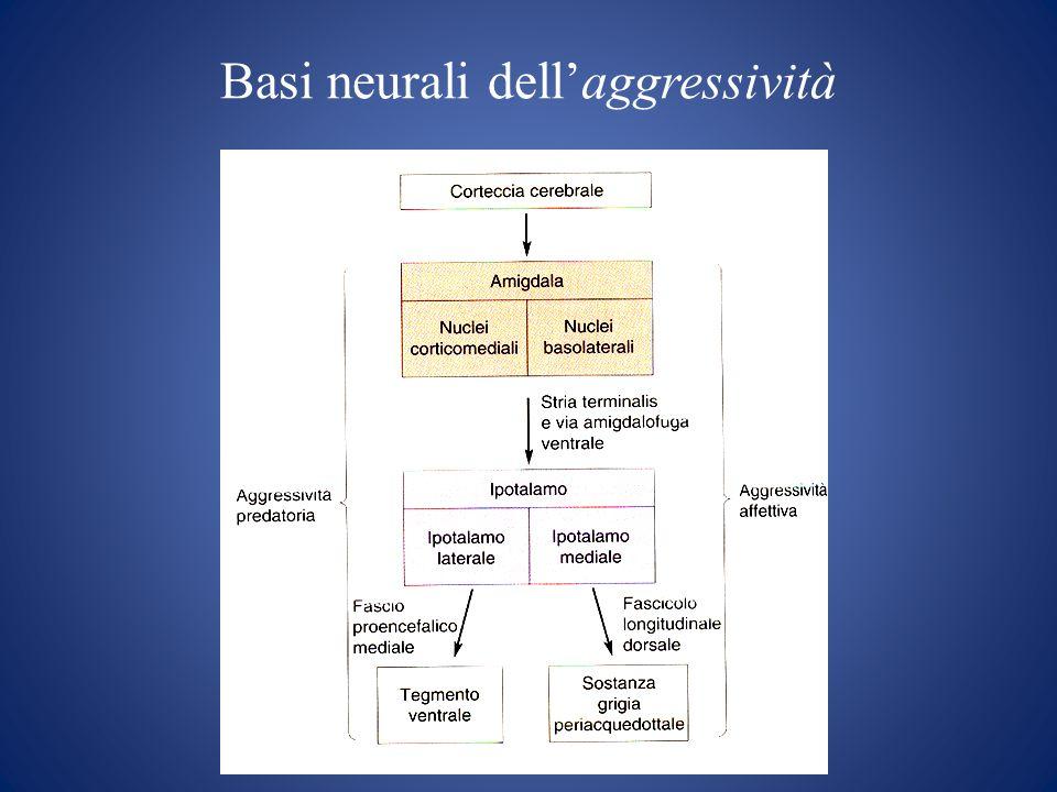 Basi neurali dellaggressività