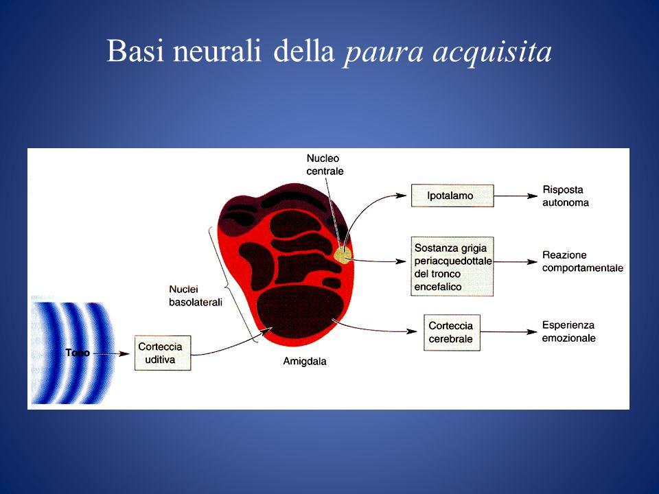 Circuiti LCSPT ( limbic-cortical-striatal-pallidal-thalamic) Corteccia Orbitofrontale Mediale Corteccia del cingolo anteriore AMIGDALA Striatum Pallidum Talamo mediodorsale Troncoencefalo Ipotalamo ?Caudato Substantia Nigra Talamo ventrale anteriore AMIGDALA