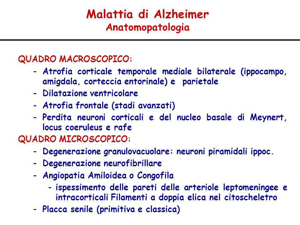 Malattia di Alzheimer Anatomopatologia QUADRO MACROSCOPICO: -Atrofia corticale temporale mediale bilaterale (ippocampo, amigdala, corteccia entorinale