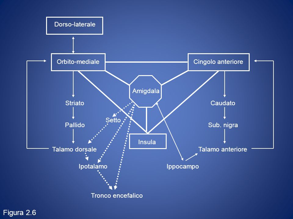 Orbito-medialeCingolo anteriore Insula Caudato Sub. nigra Talamo anteriore Striato Pallido Talamo dorsale Dorso-laterale Amigdala Ipotalamo Tronco enc