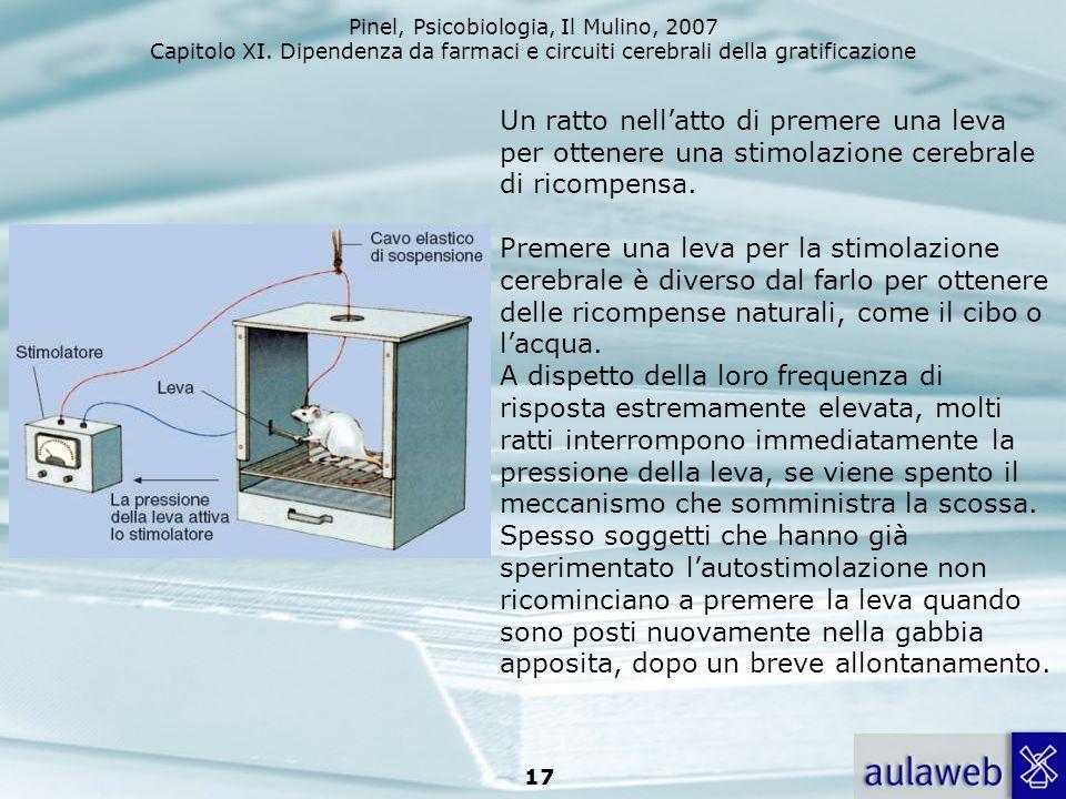 Pinel, Psicobiologia, Il Mulino, 2007 Capitolo XI. Dipendenza da farmaci e circuiti cerebrali della gratificazione 17 Un ratto nellatto di premere una