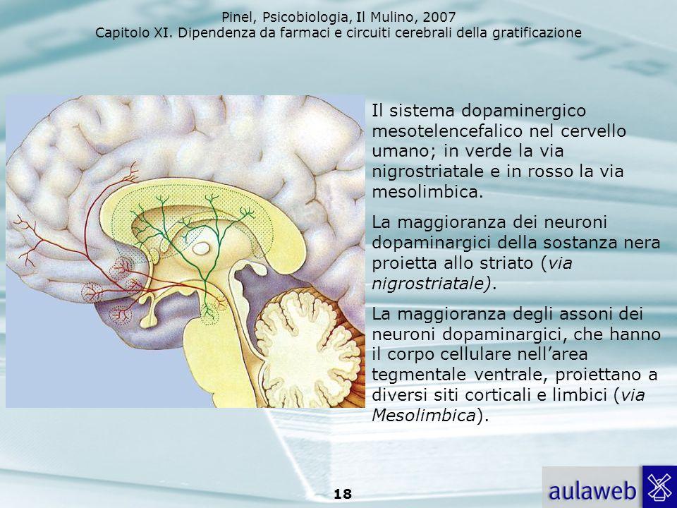 Pinel, Psicobiologia, Il Mulino, 2007 Capitolo XI. Dipendenza da farmaci e circuiti cerebrali della gratificazione 18 Il sistema dopaminergico mesotel