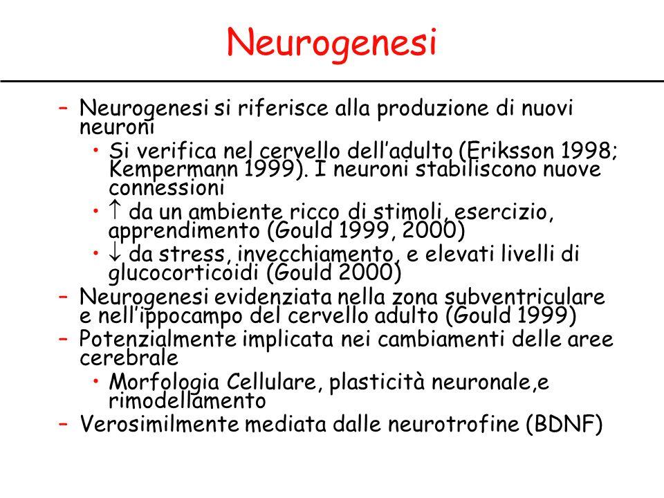 Neurogenesi –Neurogenesi si riferisce alla produzione di nuovi neuroni Si verifica nel cervello delladulto (Eriksson 1998; Kempermann 1999).
