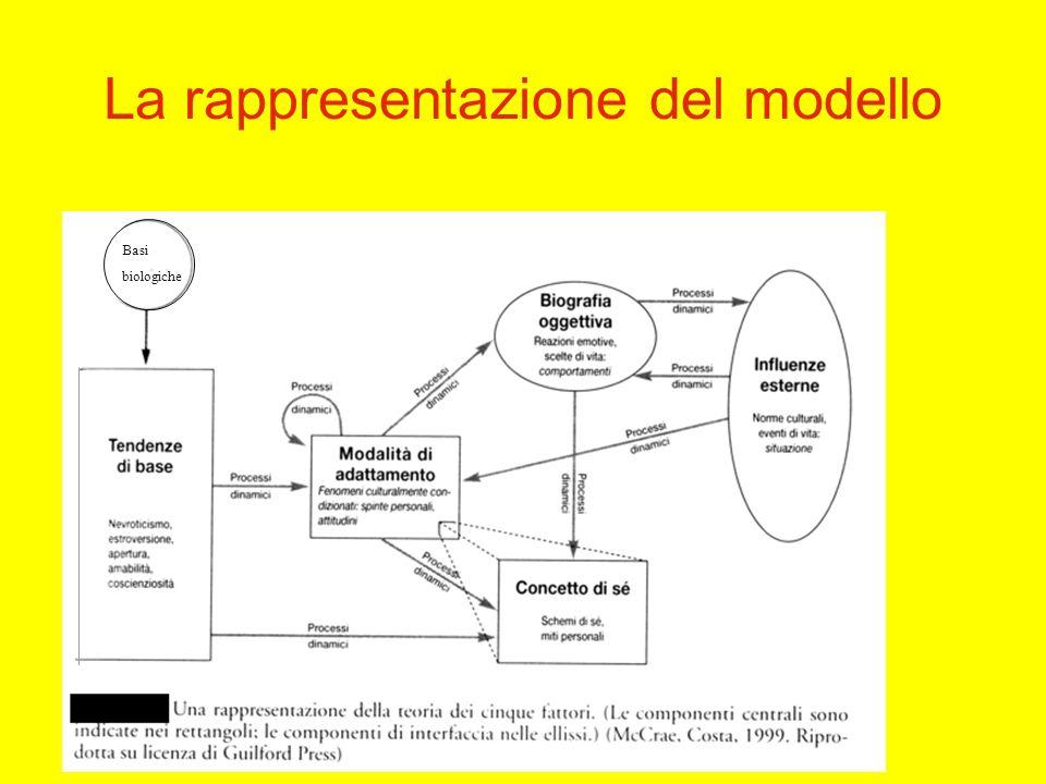 La rappresentazione del modello Basi biologiche