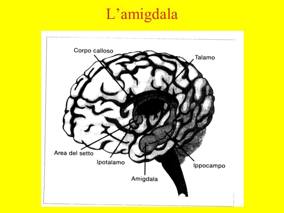 Lamigdala