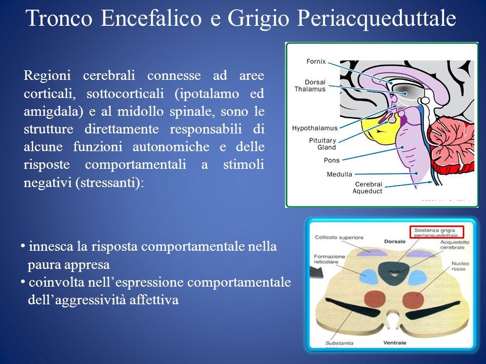 Tronco Encefalico e Grigio Periacqueduttale Regioni cerebrali connesse ad aree corticali, sottocorticali (ipotalamo ed amigdala) e al midollo spinale,