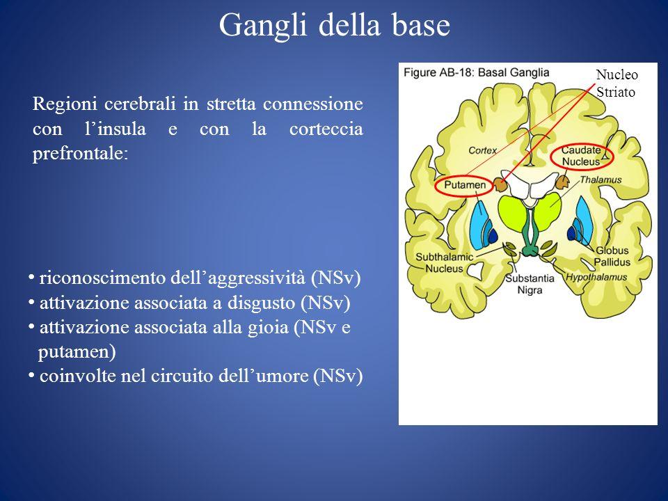 Gangli della base Nucleo Striato Regioni cerebrali in stretta connessione con linsula e con la corteccia prefrontale: riconoscimento dellaggressività