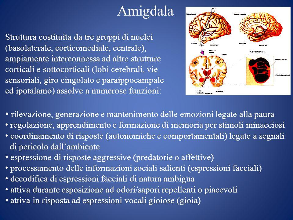 Amigdala Struttura costituita da tre gruppi di nuclei (basolaterale, corticomediale, centrale), ampiamente interconnessa ad altre strutture corticali