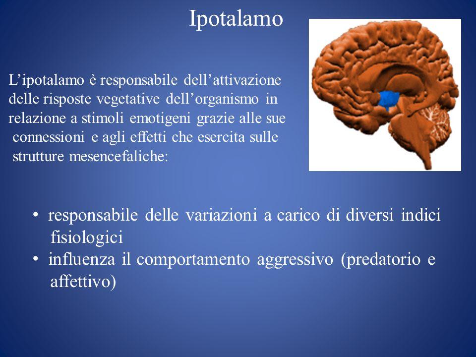 Ipotalamo Lipotalamo è responsabile dellattivazione delle risposte vegetative dellorganismo in relazione a stimoli emotigeni grazie alle sue connessio