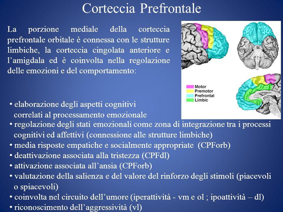 Corteccia Prefrontale La porzione mediale della corteccia prefrontale orbitale è connessa con le strutture limbiche, la corteccia cingolata anteriore