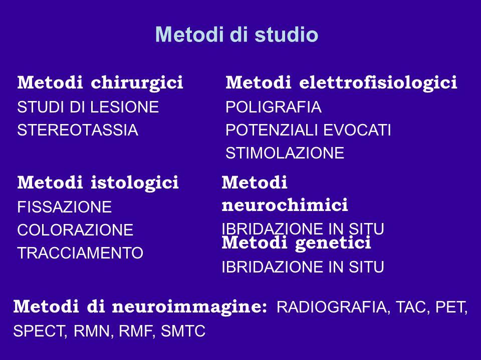 Metodi di studio Metodi chirurgici STUDI DI LESIONE STEREOTASSIA Metodi istologici FISSAZIONE COLORAZIONE TRACCIAMENTO Metodi elettrofisiologici POLIG