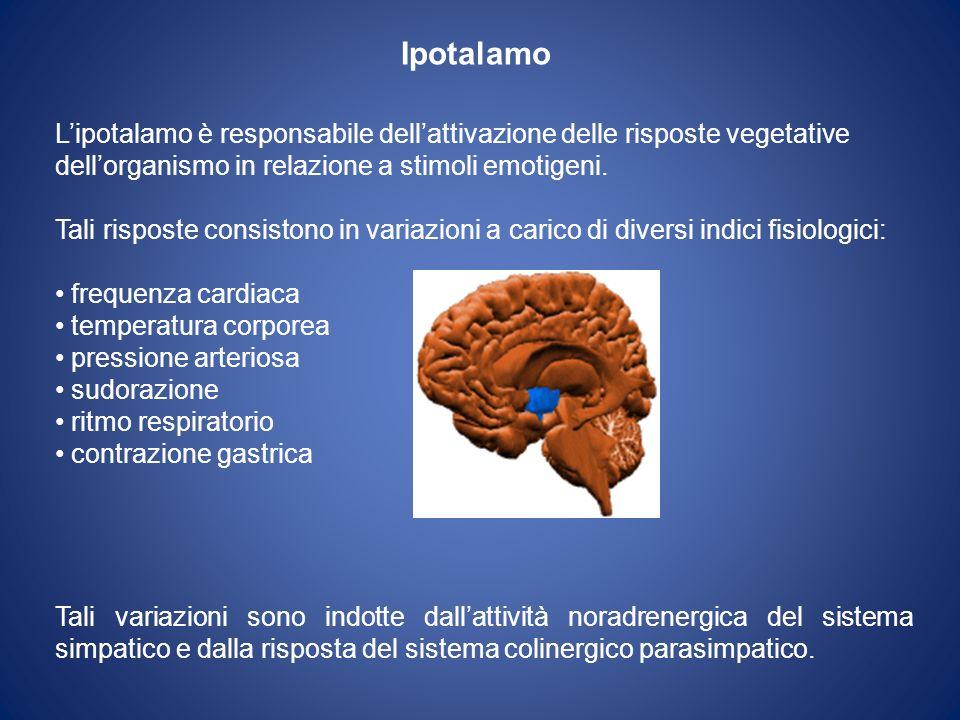 Ipotalamo Lipotalamo è responsabile dellattivazione delle risposte vegetative dellorganismo in relazione a stimoli emotigeni. Tali risposte consistono