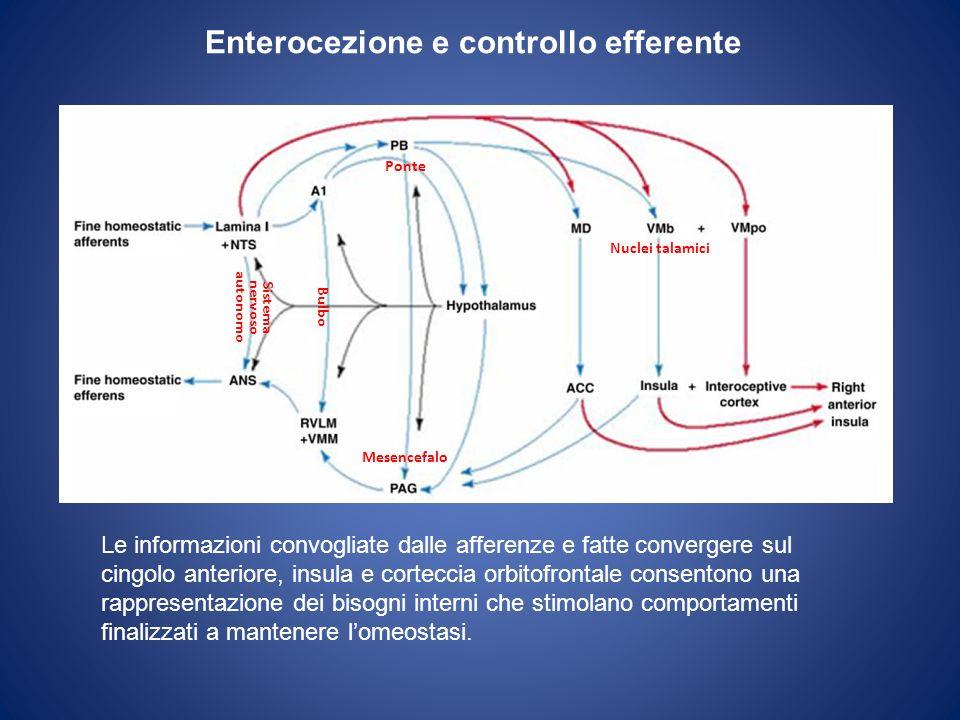 Enterocezione e controllo efferente Nuclei talamici Mesencefalo Bulbo Sistema nervoso autonomo Le informazioni convogliate dalle afferenze e fatte con