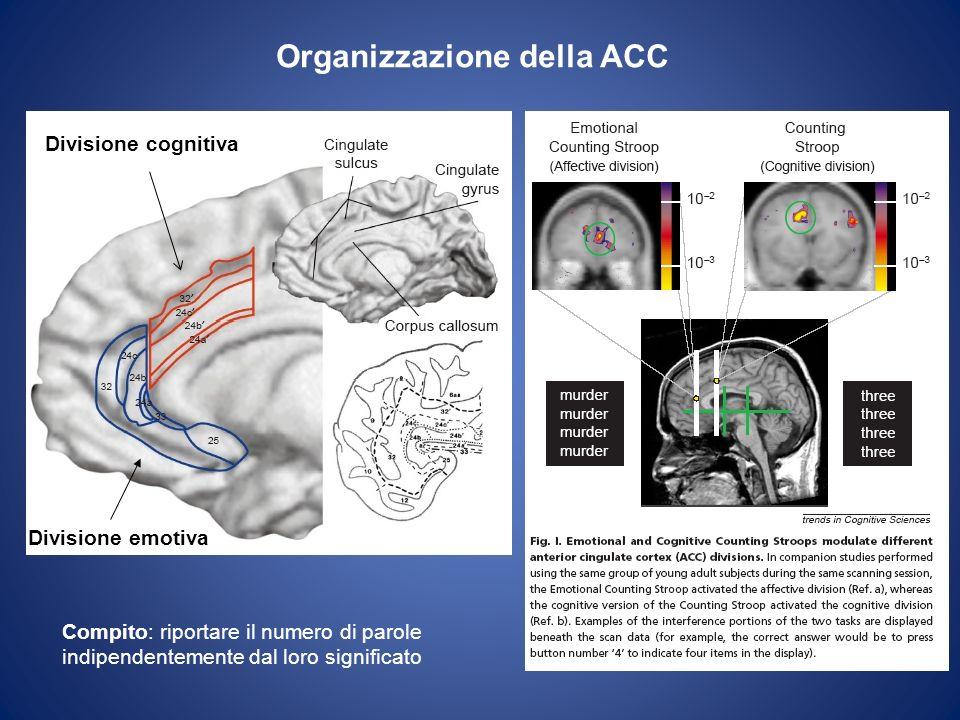 Organizzazione della ACC Divisione cognitiva Divisione emotiva Compito: riportare il numero di parole indipendentemente dal loro significato