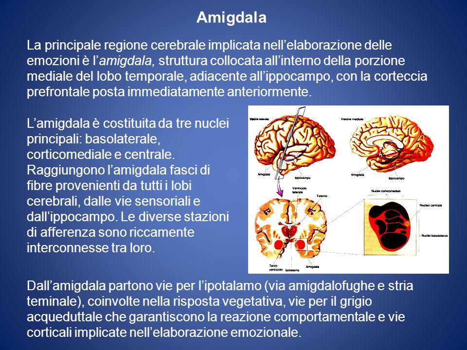 Amigdala La principale regione cerebrale implicata nellelaborazione delle emozioni è lamigdala, struttura collocata allinterno della porzione mediale del lobo temporale, adiacente allippocampo, con la corteccia prefrontale posta immediatamente anteriormente.