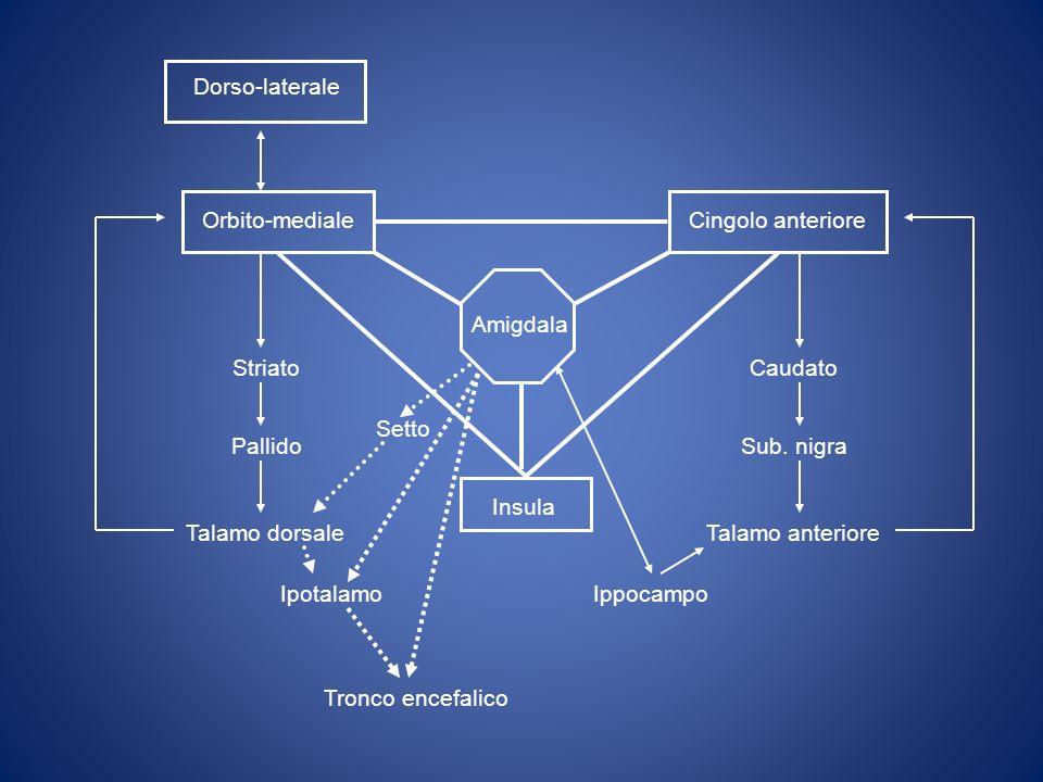 Orbito-medialeCingolo anteriore Insula Caudato Sub.