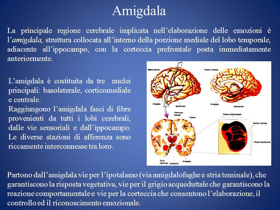 Amigdala La principale regione cerebrale implicata nellelaborazione delle emozioni è lamigdala, struttura collocata allinterno della porzione mediale