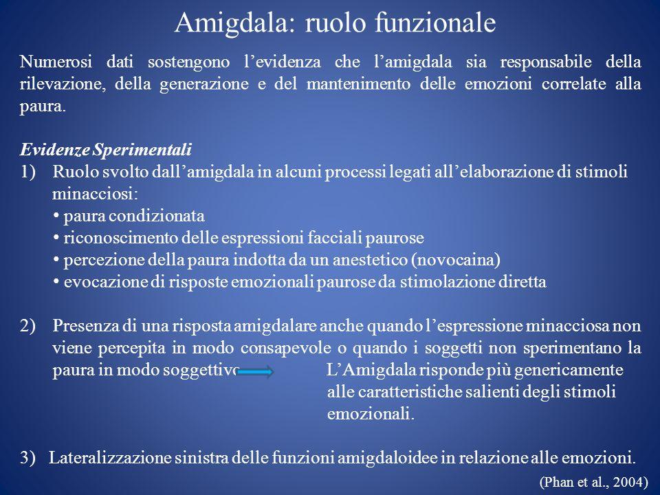 Amigdala: ruolo funzionale Numerosi dati sostengono levidenza che lamigdala sia responsabile della rilevazione, della generazione e del mantenimento d
