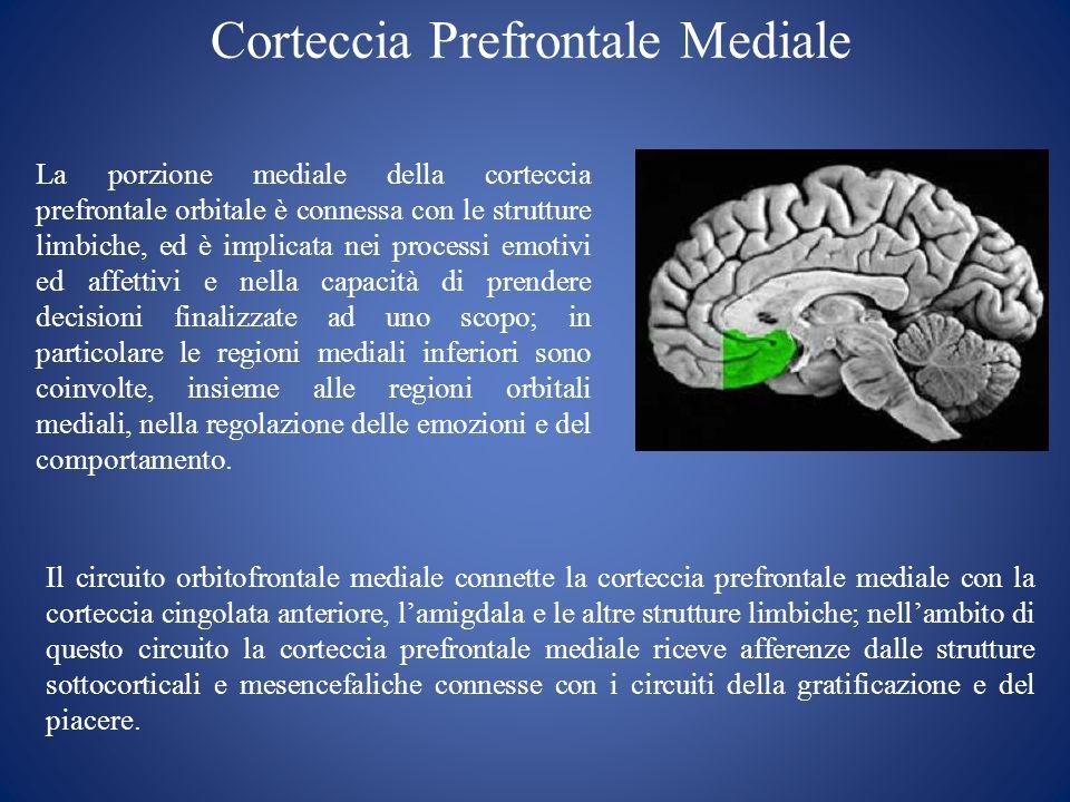 Corteccia Prefrontale Mediale La porzione mediale della corteccia prefrontale orbitale è connessa con le strutture limbiche, ed è implicata nei proces