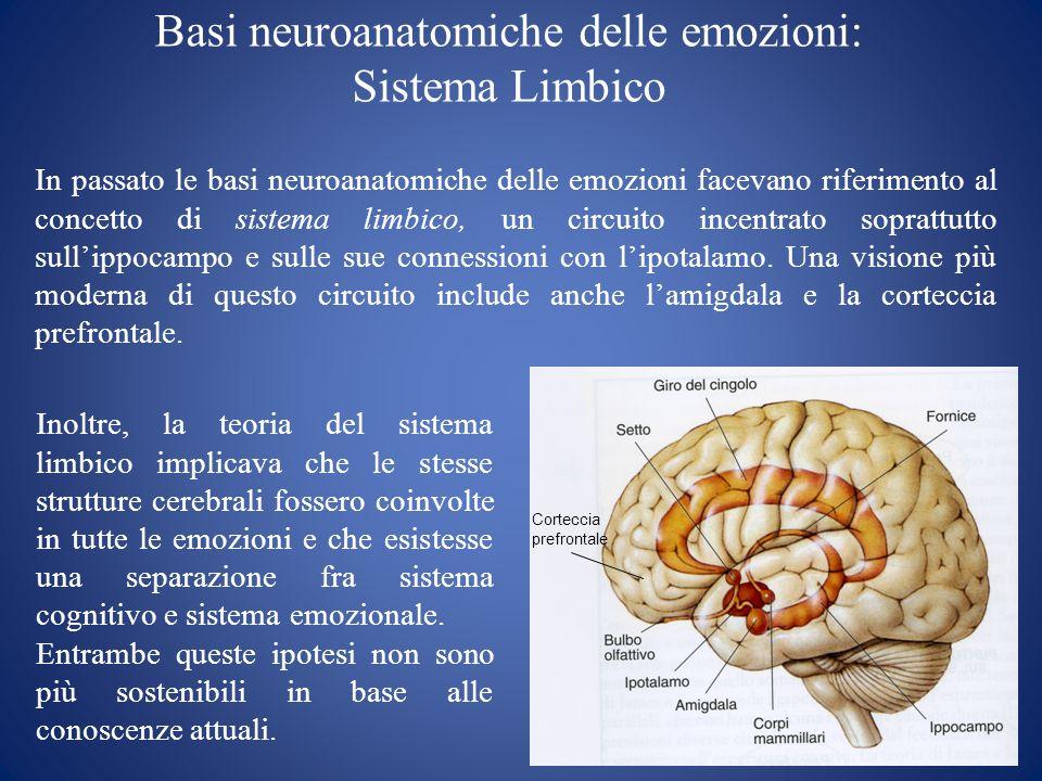 Circuiti cerebrali delle emozioni Lippocampo, lamigdala e la corteccia prefrontale sono strutture in connessione con lipotalamo.